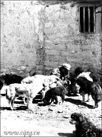 Мальчик раб и собаки: одна миска еды на всех.